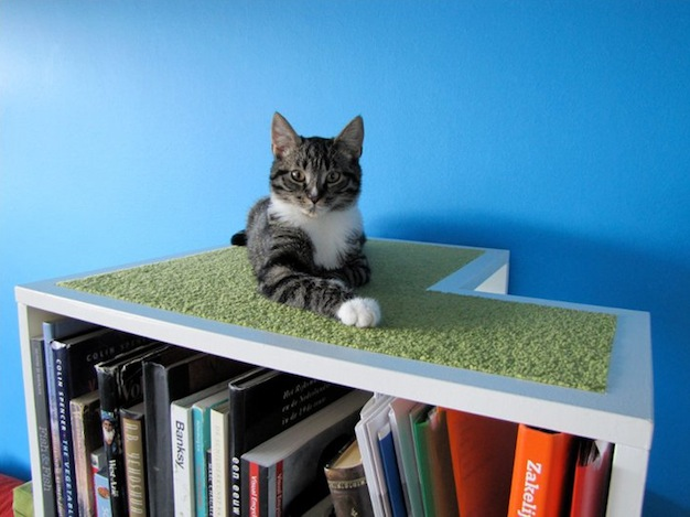 CatCase For Your Books And Your Cat's Curiosity