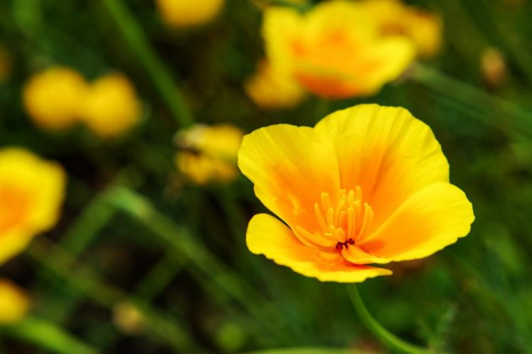 10 Beautiful Types Of Yellow Flowers For Your Backyard