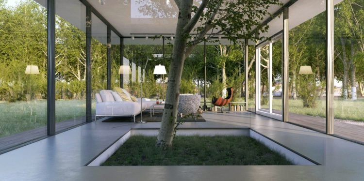 7 Types Of Indoor Trees To Spice Up Your Home