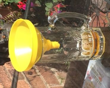 How to Make Your Very Own Killer Wasp Trap