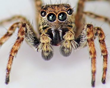 The Seven Most Common Types of House Spiders