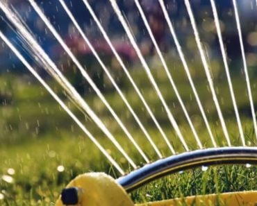 How Much You Should Be Watering Your Lawn in Spring and Summer