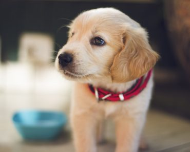 10 Home Design Tips to Consider if You Have a Pet