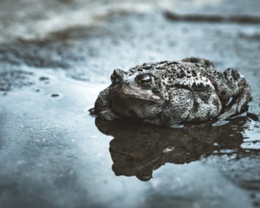 How to Take Care of That Backyard Cane Toad Problem