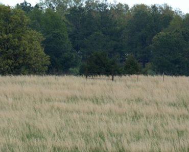 How Do You get Rid of Sage Grass?