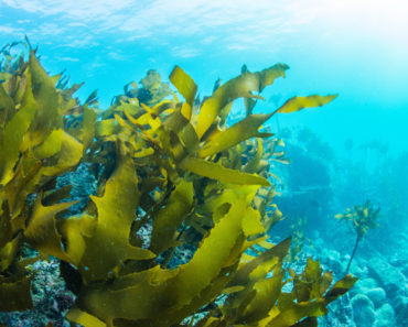 Here's How to Grow Seaweed In Your Own Home