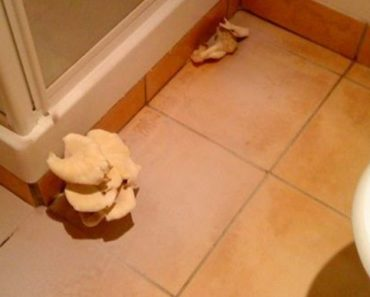 What to do if a Mushroom is Growing in the Bathroom