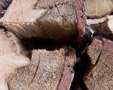What Is Punky Wood And What Can You Do About It?