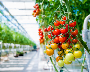 What is the Difference Between a Hothouse and a Greenhouse