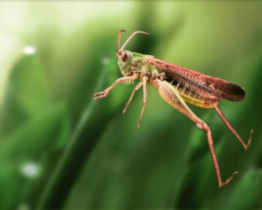 How to Get Rid of Crickets in the Basement