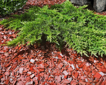 What is Cedar Mulch and What is it Used For?
